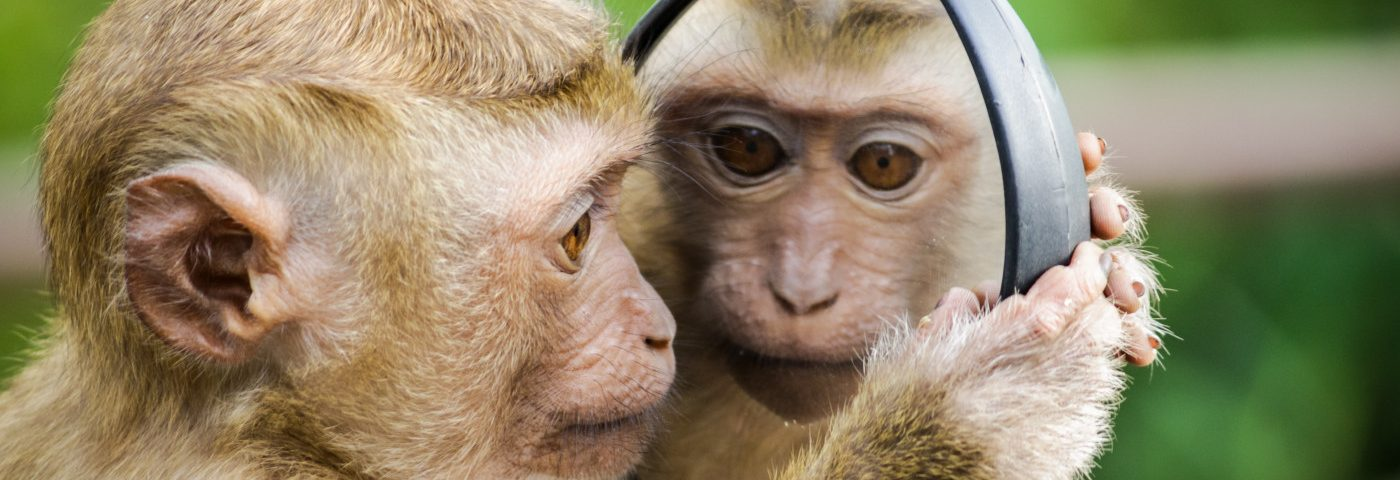 Monkeys With Rett Pay More Attention to Stronger Social Visual Stimuli, Study Finds